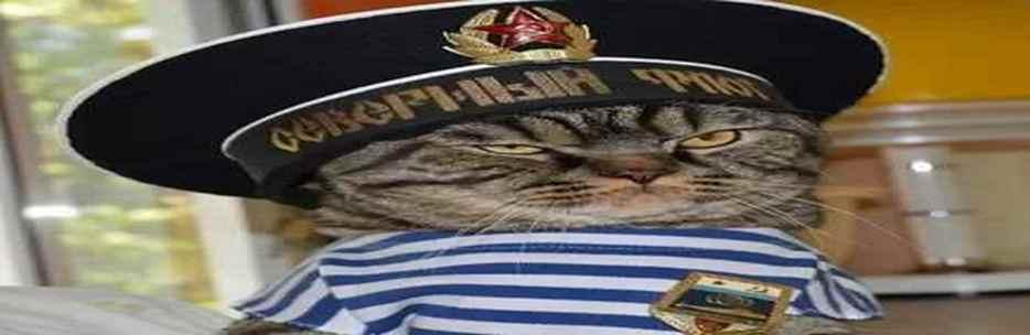 бегемот кот